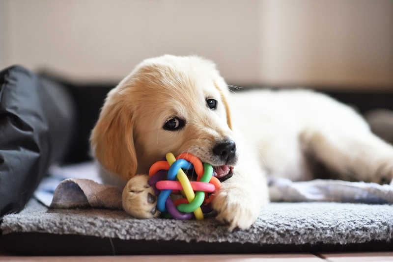 How to Choose the Right Toys for Your Dog